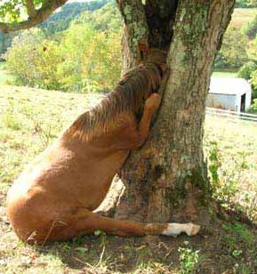 Лошадь застряла в дупле