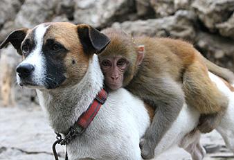 Собака и обезъяна