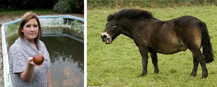 Пони в бассейне