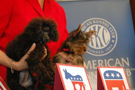 Собака для Обамы