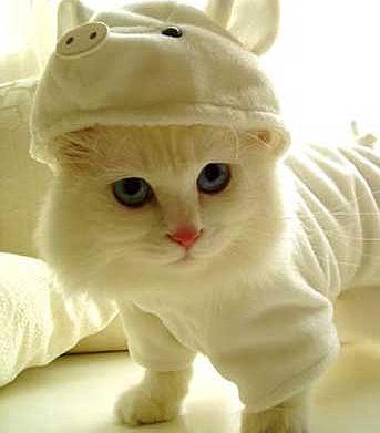 Гламурные кошки : Зоомода..