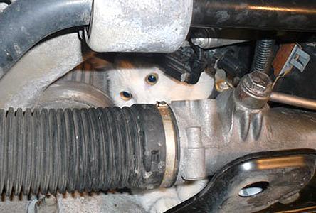 Кошка, которая спряталась в автомобиле