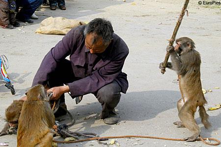 Три обиженные обезьянки побили своего хозяина