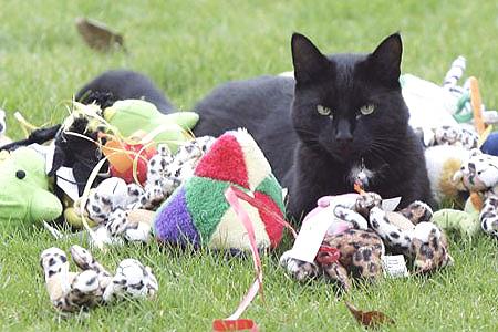 Кот Фрэнки приносит в дом только игрушки