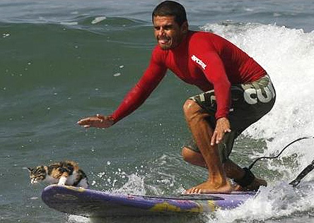 Кошка - любительница серфинга