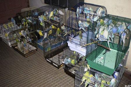 Фанат попугаев поселил в двухкомнатной квартире 1500 птиц