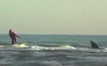 Серфинг с акулой - опасный трюк