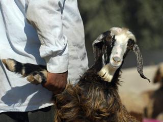 Неповинную козу заключили в тюрьму