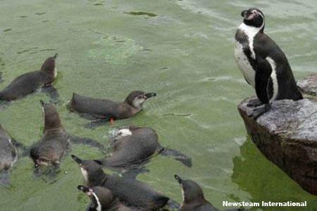Пингвин боится воды