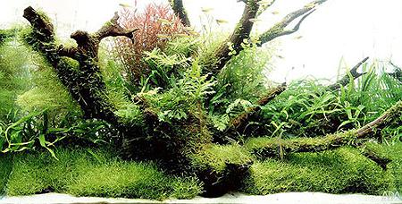 Подводный пейзаж Такаши Амано