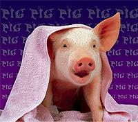 Свинья спаслась от огня в ванной