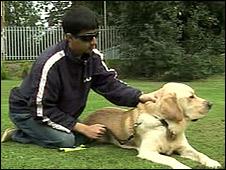 Собака-поводырь Vargo